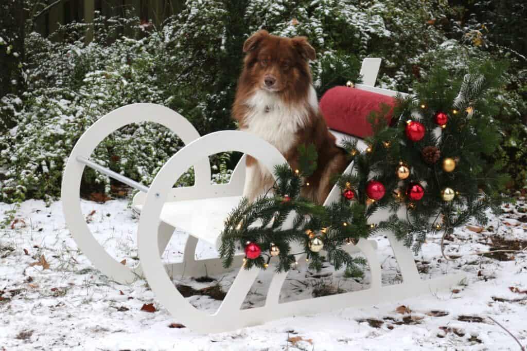 Weihnachtlicher Holzschlitten mit Hund als Warenpräsentation zur Weihnachtspause