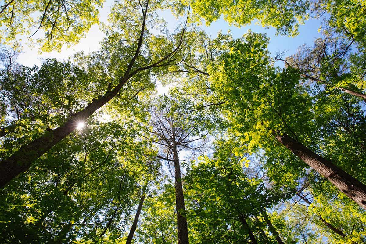 Bäume im Wald von unten fotografiert