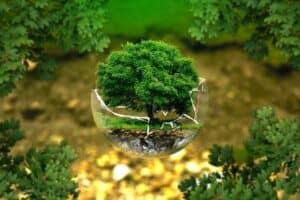 Baum in halb zerbrochener Glaskugel